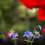 길상사에서 봄에 피는 꽃