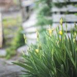 북정마을 골목에 핀 들꽃
