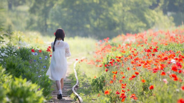 5월 출사지 고잔역 양귀비밭, 철길따라 꽃길따라 걷기