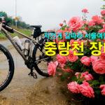 자전거 길따라 서울여행-중랑천 장미꽃길